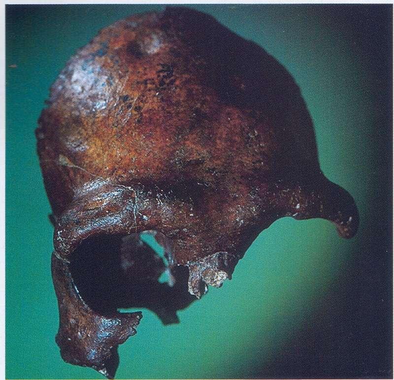 Skull (cast)