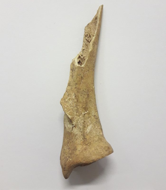 Engraved bone