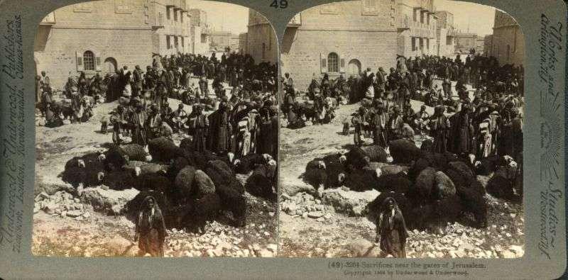 כבשים לעולה בשערי ירושלים