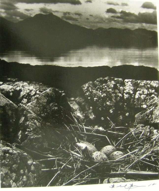 קן שחפים מאוחר בליל קיץ, האי סקיי