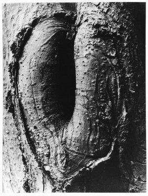 Tree (Arbol)