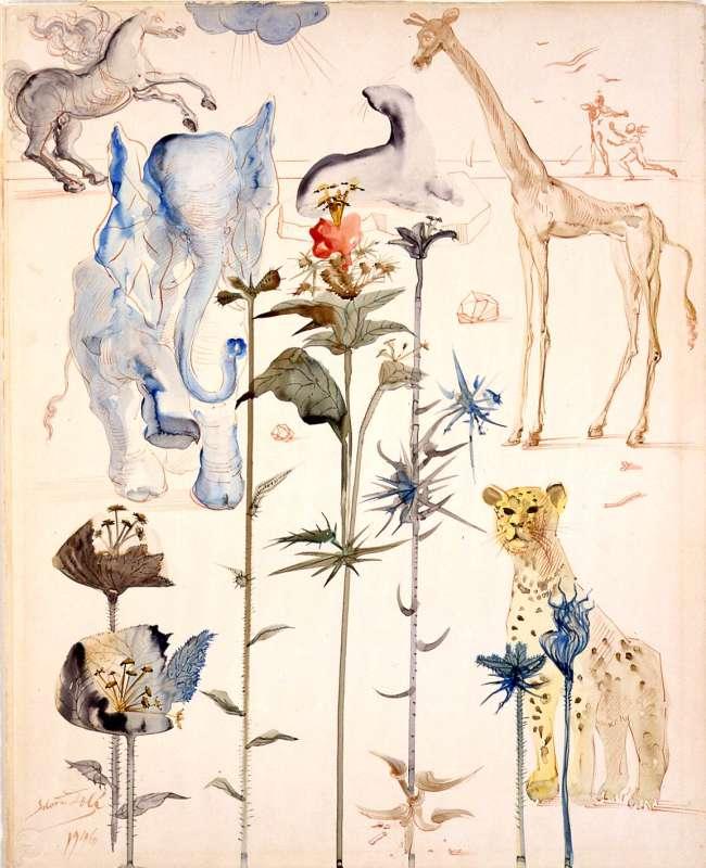 Animals and Plants
