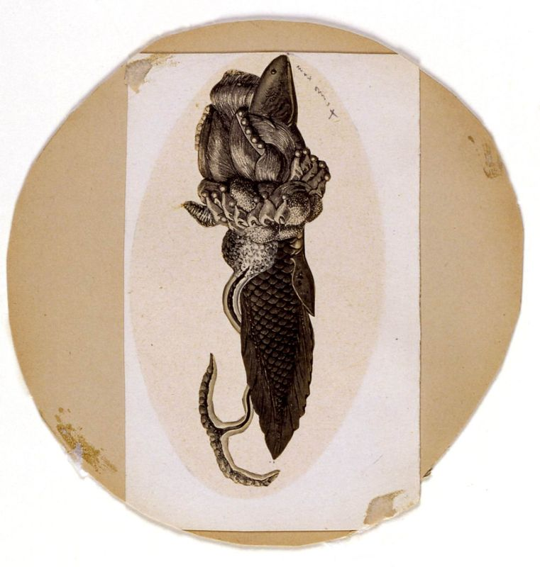 Fish - Oval View