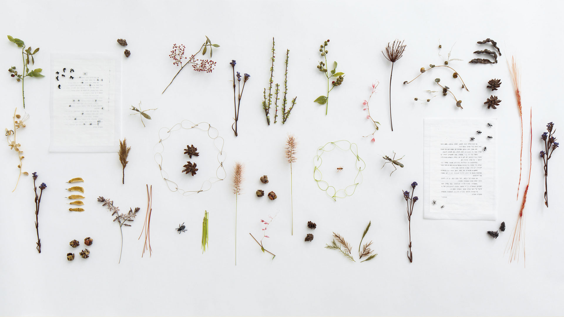 Wildflowers and Insects