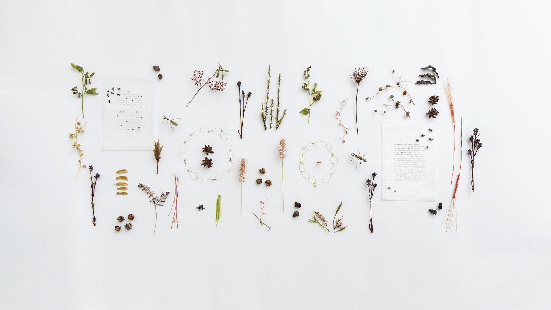 דפנה קפמן צמחים במולדת, 2018 זכוכית מעובדת במבער ודף ספר משועתק ומטופל , 80X200X7 ס