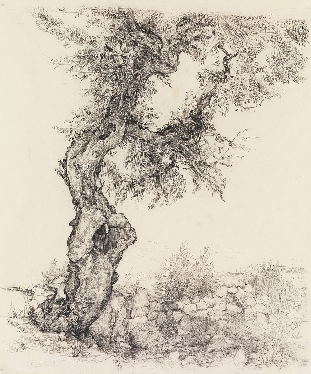 Anna Ticho, Israeli, born in Moravia 1894-1980 Olive Tree, 1935 Graphite on paper, 53.5x44 cm The Israel Museum, Jerusalem Anna Ticho Bequest