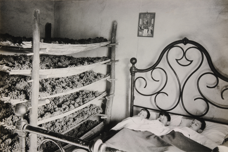 Italy, Three children in bed next to grapes clusters